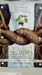 L'intelligence des arbres.jpg