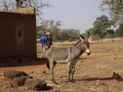 Ane et charette Burkina Faso