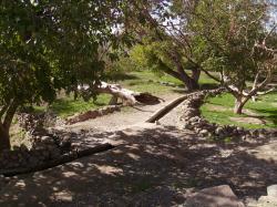 canal-arbres.jpg