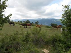chevaux-chemin.jpg