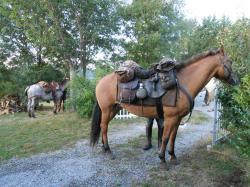 chevaux etape chalencon.jpg