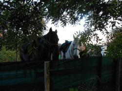 chevaux etape chalencon 2.jpg