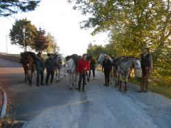 chevaux etape Les Soleillas.jpg