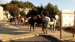 Etape chevaux Chalencon